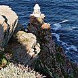 cape light house