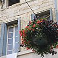hanging flowers of montpellier